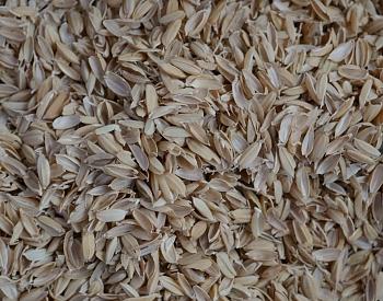La pula del riso o momigara utilizzata come nucleo delle temari artigianali