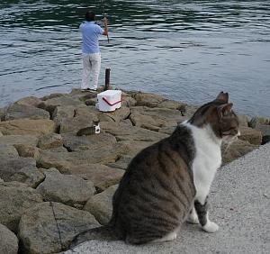 gatti sul molo e pescatore alla canna