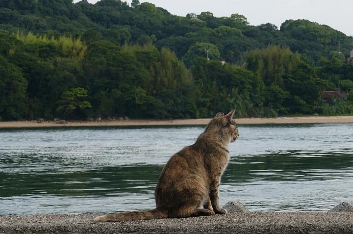 Gatto contempla il mare e l'isola verde davanti a lui